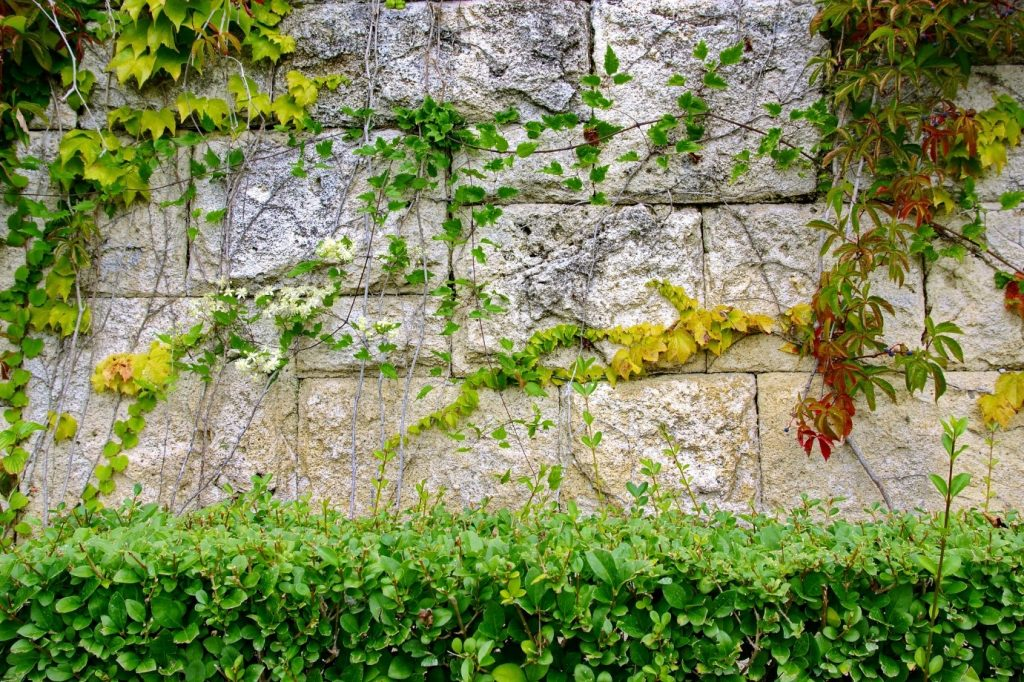 A stunning decorated garden wall